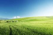 Оформление арендованной земли в собственность